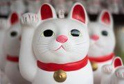 چه ارتباطی میان بیماری عصبی و انگل گربه وجود دارد؟