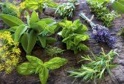 درمان مشکلات بدن با داروهای گیاهی