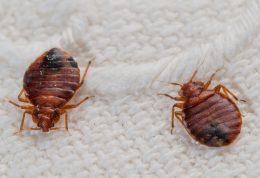 راهکارهای موثر برای رهایی از شر حشرات موذی در رختخواب