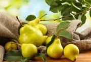 بررسی ارزش تغذیه ای میوه گلابی