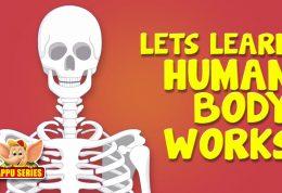 اهمیت افزایش سلامت استخوان ها