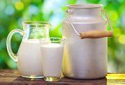 فواید سلامتی شیر شتر