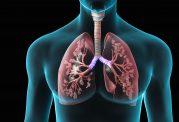 7 ماده خوراکی که ضامن سلامت ریه های شما خواهند بود