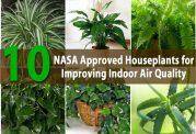 آشنایی با گیاهان مفید برای تصفیه هوا
