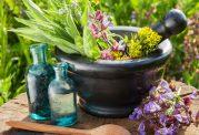 پرهیز افراد دارای فشار خون از مصرف خودسرانه گیاهان دارویی