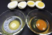 پیامدهای مصرف تخم مرغ فاسد