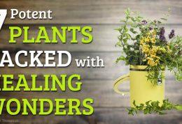 اسانس گرفتن از گیاهان دارویی