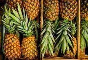 آناناس و توصیه های مصرف آن در بارداری