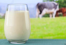 کدام شیر بهترین جایگزین برای شیر گاو است؟