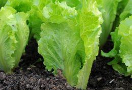 6 سبزی مفید برای لاغری و تناسب اندام
