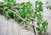 خواص دارویی و درمانی گیاه آویشن