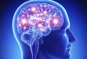 7 غذای بد برای مغز انسان