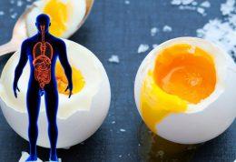 مزایای مصرف تخم مرغ کامل برای بدن