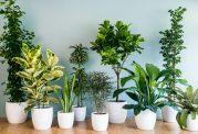 اصول مهم نگهداری از گیاهان آپارتمانی