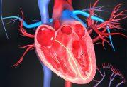 امراض قلبی و عروقی سلامت بانوان را تهدید میکند