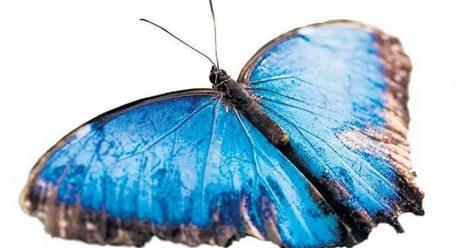 علائم و نشانه های بیماری پروانه ای