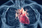 باین خوراکی ها رگ های قلب را باز کنید
