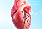 علل بروز امراض قلبی و عروقی در بانوان