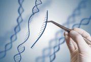 مردم فقط 8.2٪ از DNA خود را استفاده می کنند