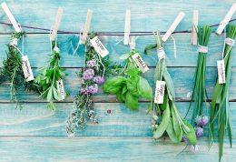 بازسازی بافت های بدن با گیاهان