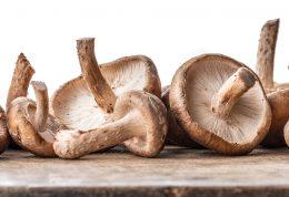قارچ شیتاکه و فواید ثابت شده علمی درباره آن