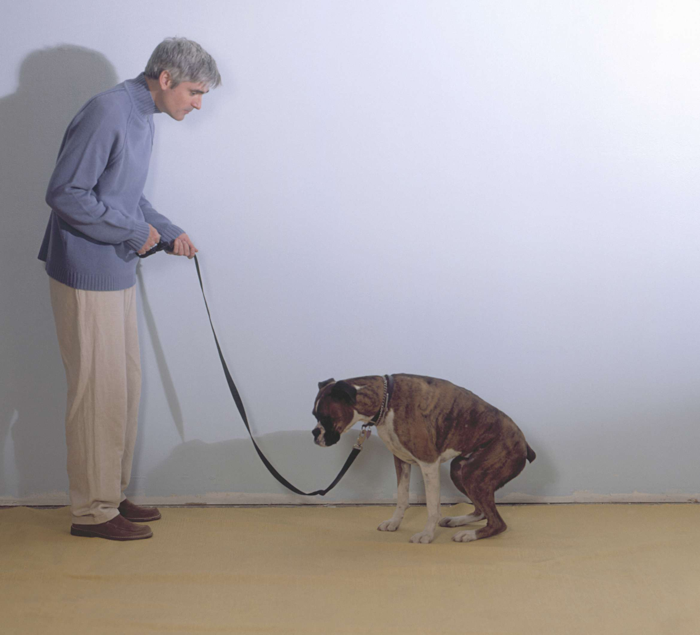 سلامتی سگ