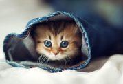 انواع نژاد گربه ؛ 12 نوع گربه محبوب خانگی