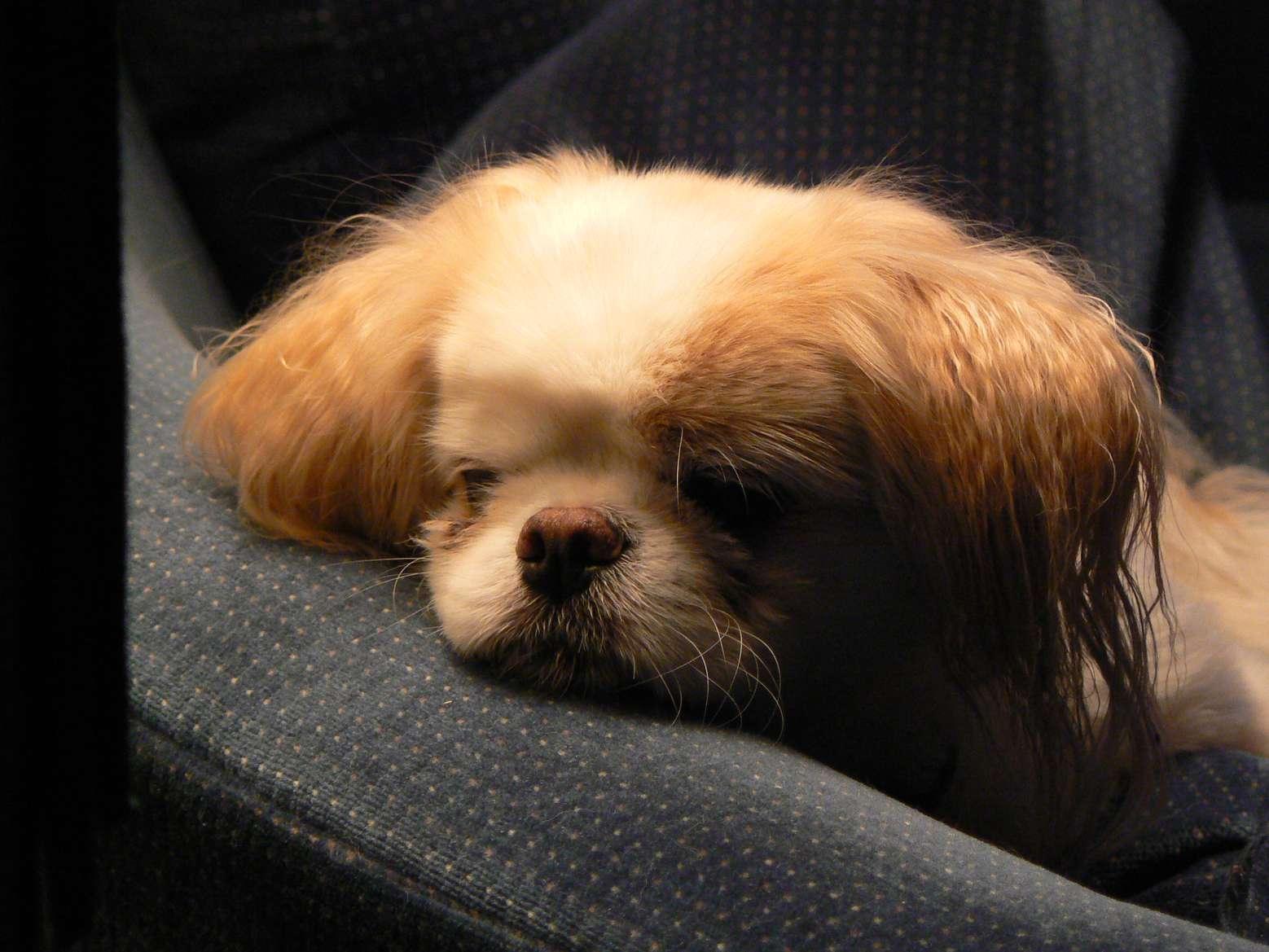 بیماری های عفونی سگ خانگی