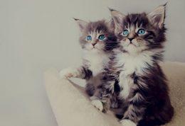 مشکلات رفتاری گربه ها چیست؟+ راهنمایی کامل