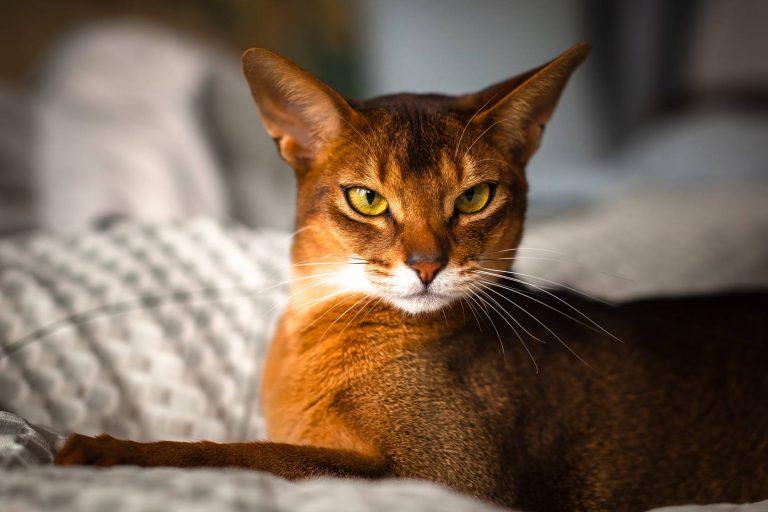 رایج ترین مشکلات پوستی گربه ها
