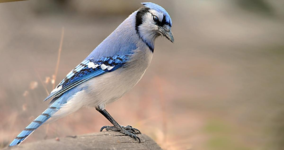 علائم بیماری در پرندگان خانگی چیست؟