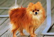 10 مشکل شایع در رابطه با سلامتی سگ خانگی