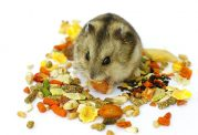 تغذیه همستر چگونه باید باشد؟+ راهنمایی کامل