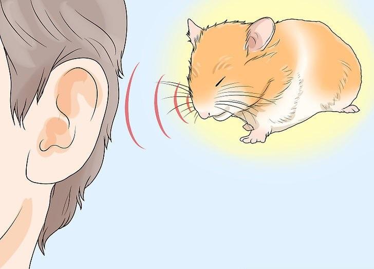 بیماری در همستر