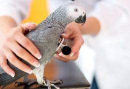 بیماری های طوطی و پرندگان خانگی