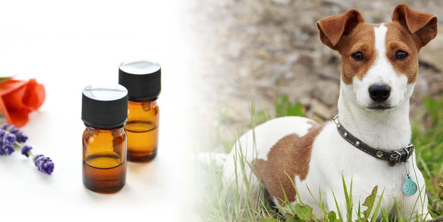 بهترین روغن های گیاهی برای حیوانات خانگی