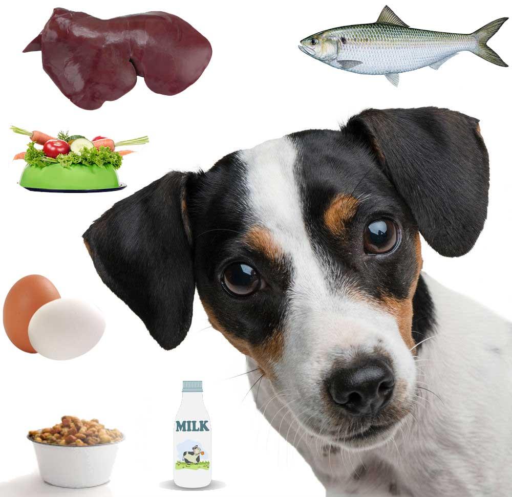 تغذیه سگ