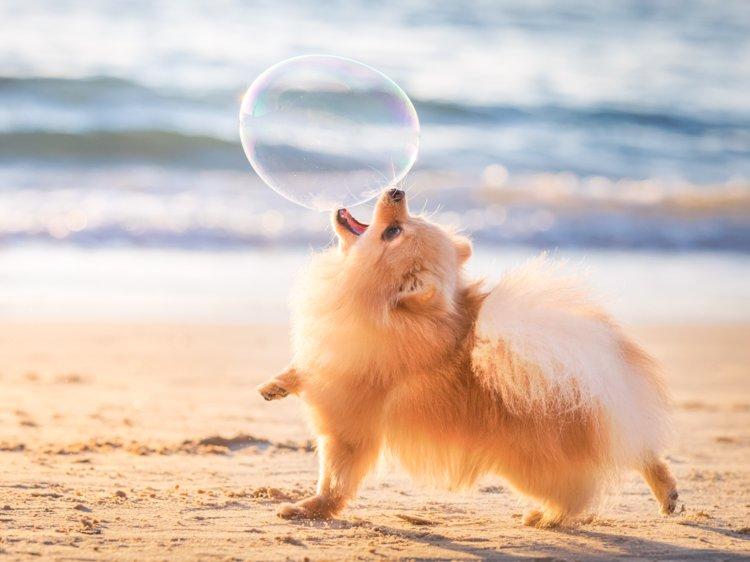 مشکلات رفتاری رایج در سگ