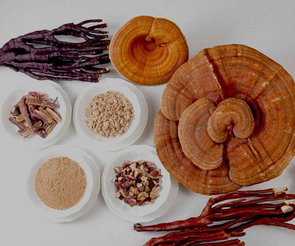 گانودرما؛ نحوه مصرف، عوارض، کاربرد و مزایای قارچ گانودرما