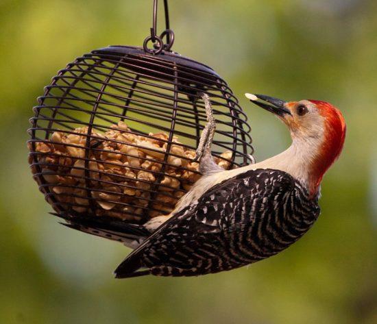 افزایش وزن پرنده