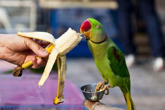 تغذیه پرندگان خانگی و دادن جایزه سالم به آنها