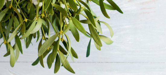 Mistletoe 800x365 header min e1545804509362 - گیاه دارواش (Mistletoe)؛ 6 فایده شگفت انگیز گیاه دارواش