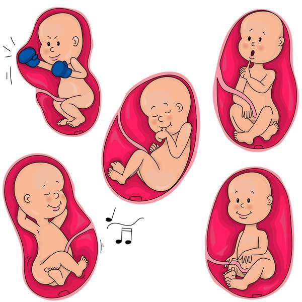 لگد زدن جنین