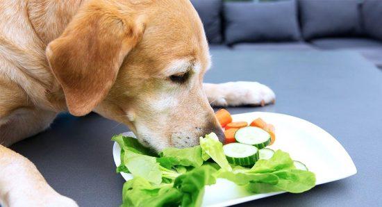 هویج برای سگ