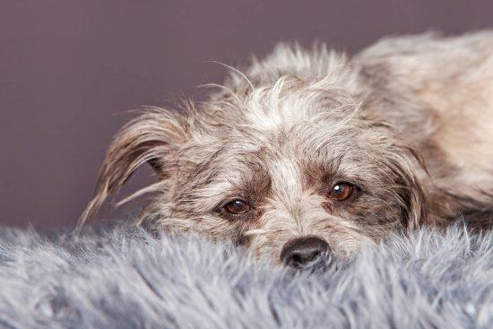 درمان های طبیعی برای بیماری سگ های خانگی