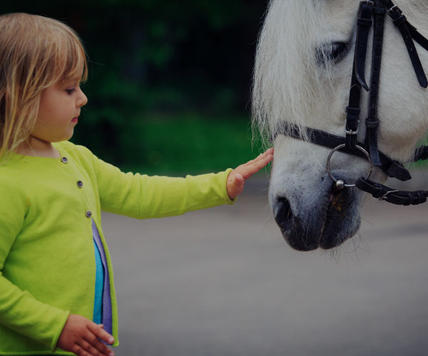 استفاده از اسب درمانی برای سلامت روانی
