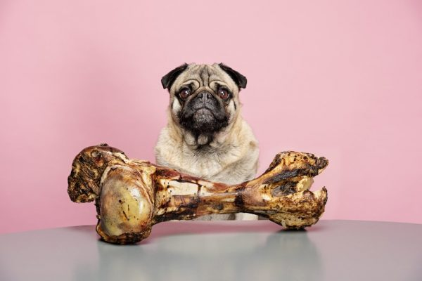 تغذیه حیوانات خانگی؛ بهترین تغذیه برای آنها چیست؟