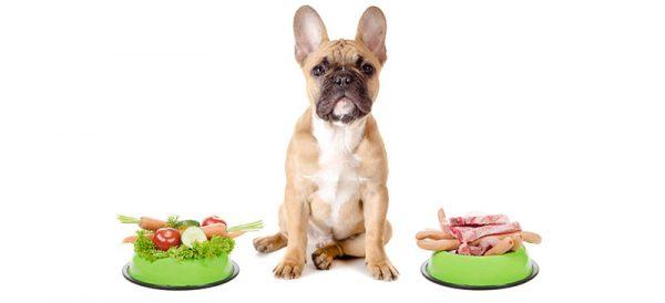 تغذیه حیوانات خانگی