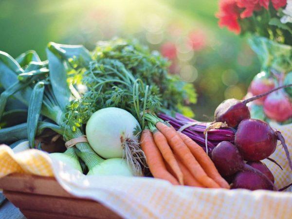 بهترین منابع پروتئین برای رژیم های غذایی گیاهخواری و وگان