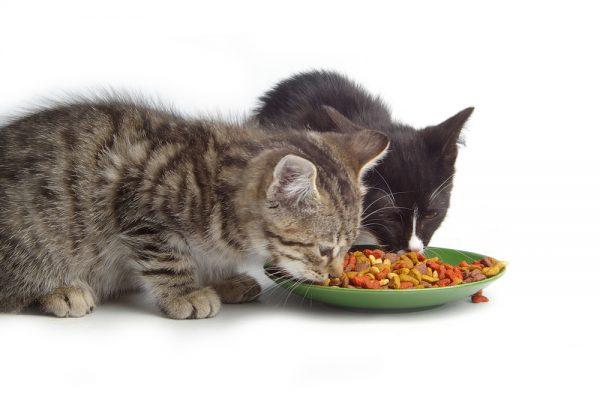 آنزیم های گوارشی برای گربه ها -0